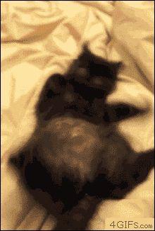 Crazy cat and it's behaviour