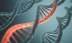 Could the key to a good memory be found in our genes? - MEDICAL NEWS TODAY #Memory, #Genes