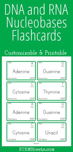 DNA and RNA Nucleobases Flashcards - Customizable and Printable