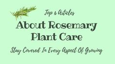 Top 6 Articles About Rosemary Plant Care ndash Stay Covered In Every Aspect Of G. Top 6 Articles A Rosemary Plant Care, How To Dry Rosemary, Chicago Landscape, Yard Care, Landscaping Plants, Drying Herbs, The Cure, Modern Design, How To Make Money