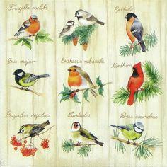 4 x Single Luxury Paper Napkins for Decoupage Craft Bird Square Nature   eBay