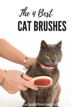My cat is has a problem with matting.  Check our our tips for the best grooming brushes to make your pet happy!