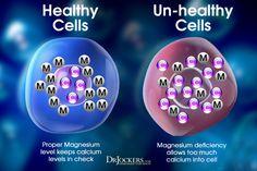 Top 12 Best Magnesium Rich Foods - DrJockers.com Calm Magnesium, Magnesium Benefits, Coconut Health Benefits, Signs Of Magnesium Deficiency, Calcium Deficiency, Mineral Deficiency, Best Magnesium Supplement, Magnesium Supplements, Healthy Body Weight