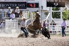 Rodeo action at the Cheyenne Frontier Days celebration in Wyoming's capital city. Photo, July 23, 2015 by Carol M. Highsmith. Gates Frontiers Fund Wyoming Collection within the Carol M. Highsmith Archive, Library of Congress, Prints and Photographs Division.