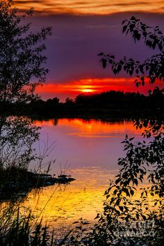 ✮ A look across the water with the trees framing the beautiful sunset
