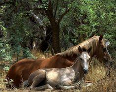 Salt river wild horses... So pretty!                                                                                                                                                     More