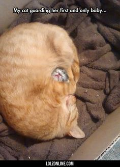 My Cat Guarding Her First And Only Baby...