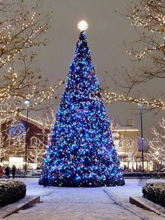 A very large Christmas tree stands so tall! Mainly covered in dark blue Christmas lights. Clear lights light up in the background. Christmas Scenes, Noel Christmas, Outdoor Christmas, Christmas Photos, Winter Christmas, All Things Christmas, Winter Snow, Christmas Tumblr, Christmas Displays