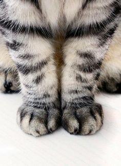 Cute Pair of Cat Paws