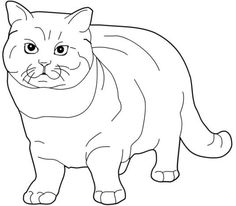 Big Cat Cats Coloring Pages For Teens And Adults