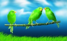 What beautiful green birds!