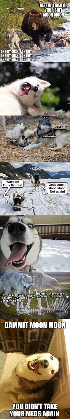 The return of Moon Moon - Funny Dog Quotes - The return of Moon Moon Funny Dog Quotes funny-derp-wolf-moon-moon-meme The post The return of Moon Moon appeared first on Gag Dad. The post The return of Moon Moon appeared first on Gag Dad. Husky Humor, Funny Husky Meme, Dog Quotes Funny, Funny Dogs, Funny Puppies, Cute Funny Animals, Funny Animal Pictures, Funny Cute, Animal Humor