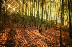 Glittering forest Canvas Print The sun shines through the trees of a broadleaf forest. For the original pic, please look here: https://society6.com/product/autumn-sun-and-shadows_print#1=45 sunrays, sunbeams, landscape, nature, orange, fall, autumnally