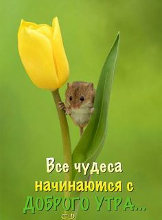 Доброе утро Good Afternoon, Good Morning Good Night, Birthday Greeting Message, Christian Pictures, Morning Greeting, Flower Pictures, Wise Quotes, Nature Photography, Funny