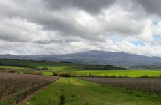 Amiata from Brunello di Montalcino Vineyard- Sant'Angelo Montalcino Tuscany