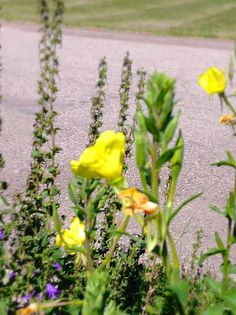 Yellow flowers in summer!! I took this photo!!