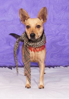 Forever home needed for CANELA