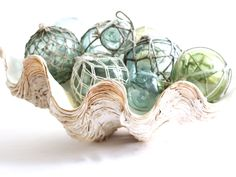 large old clam shell at coastal vintage