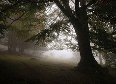 Bosque y niebla, pura naturaleza. Sierra de Urbasa, #Navarra, by @jimbilu / Instagram.