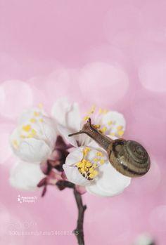 Sweet voyage by Anastasia-Ri #nature #photooftheday #amazing #picoftheday