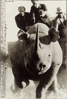 """Daranjani Rhino roping"" A black rhino flees ropers in eastern Kenya in 1968. Its capture was part of a relocation effort | Photo by Peter Beard,"