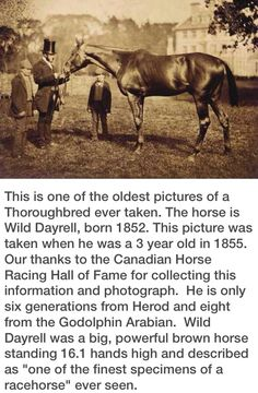 Wild Dayrell - one of the oldest photographs of a Thoroughbred - ca. 1855