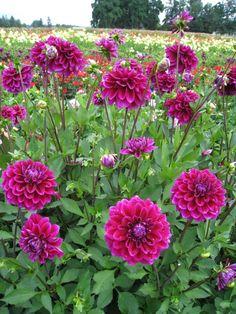 Boogie Nights, Pandora Gold, Garden Oasis, Fall Winter, Autumn, Garden Planters, Beautiful Landscapes, Garden Inspiration, Beautiful Flowers