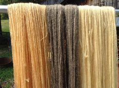 Jewelweed dyes quickly, within 10 minutes you can pull out lovely shades of peach. As the pot exhausts you'll get buttery yellow. The bronze in the middle is jewelweed over a natural gray wool.