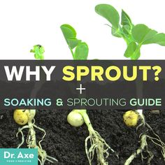 Why and How-to Sprout | Convenient Care Plus is healthcare for your on-the-go family! No more waiting at the doctor's office- talk to a doctor 24/7! Our plans help to make your healthcare more affordable. Learn more at convenientcareplus.com