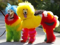 Fashion will go to the dogs at the SUNSHINE COAST PRIDE FESTIVAL's Pride Paws Parade, to be held during the festival's Fair Day. http://www.qnews.com.au/glam-doggy-fashion-show-for-sunshine-coast-pride/