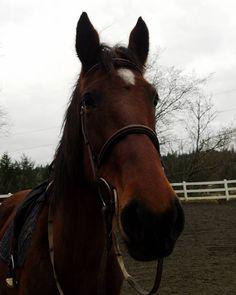 Spring where are you? #horse #horses #horseoftheday #horsesofinstagram #instahorse #instagramhorse #instagramhorses #equestrian #equestrianlife #horsebackriding #horseriding #hackney #hackneyhorse #ilovemyhorse #horselove #ahhs #hackneyspirit