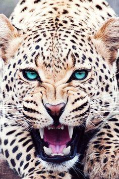 cool :)<3 love it roar
