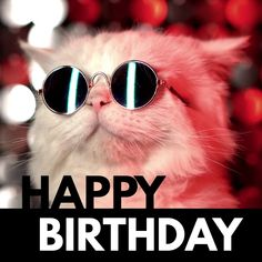 Simple Birthday Cards, Happy Birthday Fun, Happy Birthday Messages, Cat Birthday, Birthday Surprises, Birthday Memes, Funny Wishes, Cat Sunglasses, Online Greeting Cards