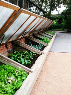 Cold frames, looks like w/ corrugated polycarbonate panels instead of glass