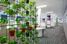 Creative Spaces brings together the disciplines of architecture and commercial interior design. Our strength is making space fit people Commercial Interior Design, Commercial Interiors, Making Space, Auckland, Spaces, Architecture, Creative, Green, Plants