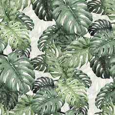Botany Monstera - Fototapeter & Tapeter - Photowall
