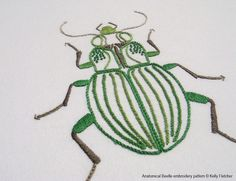 Anatomical Beetle | Flickr - Photo Sharing!