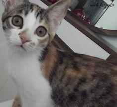 kittenlove12