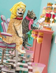 Cats On Beauty Parlor.. Lolsx