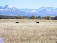 Horse Property for Sale in Delta County in Colorado. Gorgeous 360 degree views including the Grand Mesa, West Elks and mouth of the Black Canyon. Cute house surrounded by large fenced in yard and mature trees. Good pasture or hay field with excellent water rights. Brand new shelters and corrals.