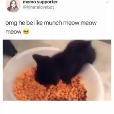 Cute Animal Videos, Funny Animal Pictures, Cute Little Animals, Cute Funny Animals, Cute Cats And Kittens, Kittens Cutest, Funny Cute Kittens, Gato Gif, Image Chat
