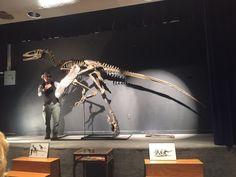 Dakotaraptor- largest raptor to be discovered (2015)