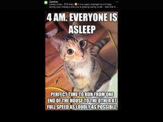 No sleeps
