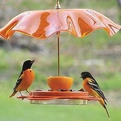 Oriole Feeder does triple duty! The first Oriole Feeder ever to accommodate nectar, one-half orange and four places for jelly. It has been known for years, that the color orange attracted Orioles. Pretty Birds, Love Birds, Beautiful Birds, Oriole Bird Feeders, Bird Suet, Parasols, Umbrellas, Backyard Birds, Baltimore Orioles