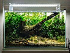 Nature Aquarium Vancouver