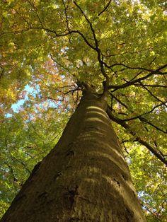 Træ Foto: soshansen