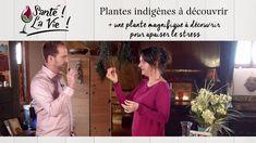 Plantes indigènes à découvrir + une plante magnifique à découvrir pour a... Ayurveda, Native Plants, Natural Health, Wisdom
