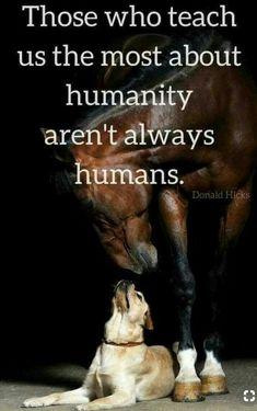 25 Inspirational Advice Given By The Pets In Your Life - World's largest collection of cat memes and other animals Dog Quotes, Animal Quotes, Life Quotes, Quotes About Dogs, Animal Memes, Beautiful Horses, Animals Beautiful, Cute Animals, Horse Love