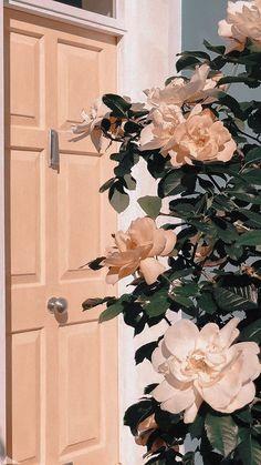 Wallpaper rose white wallpaper on Wallpaper Rose, Tumblr Wallpaper, Screen Wallpaper, Wallpaper Backgrounds, Hipster Phone Wallpaper, Aesthetic Drawing, Flower Aesthetic, Aesthetic Collage, Aesthetic Pastel Wallpaper