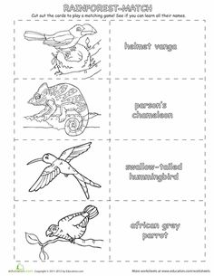 Worksheets: Rainforest Animals Matching Game